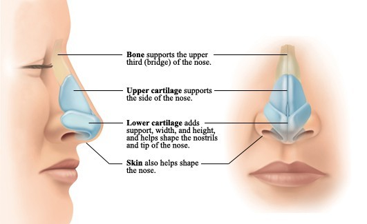 Nose care treatment in Las Vegas Usa America