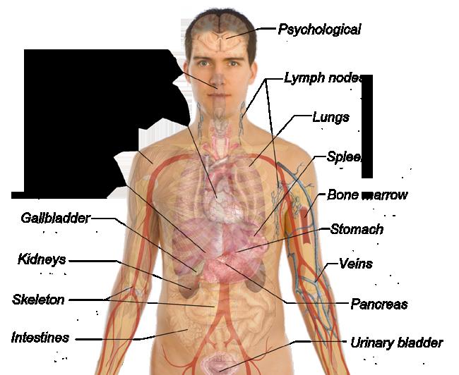 las vegas medical care know human body :